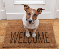 Cute dog on a Welcome mat in front of a door