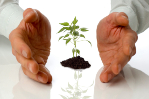 Photo of businessman's hands nurturing a seedling