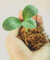 Photo of a hand holding a tiny seedling